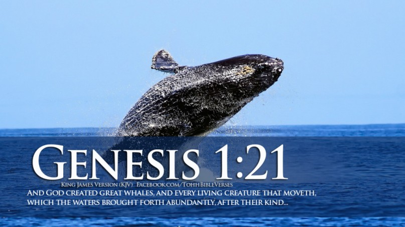 Bible-Verses-On-Creation-Genesis-1-21-Jumping-Whale-HD-Wallpaper-1024x576
