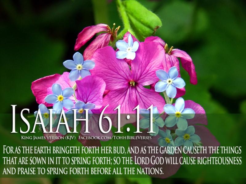 Bible-Verses-On-GODs-Love-Isaiah-61-11-Flower-HD-Wallpaper