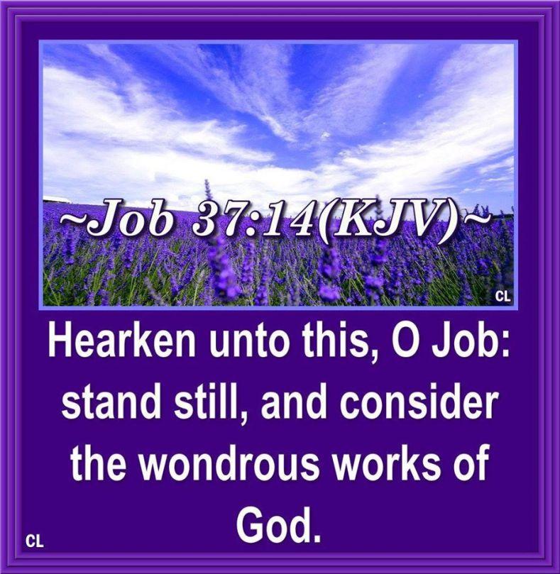 job371